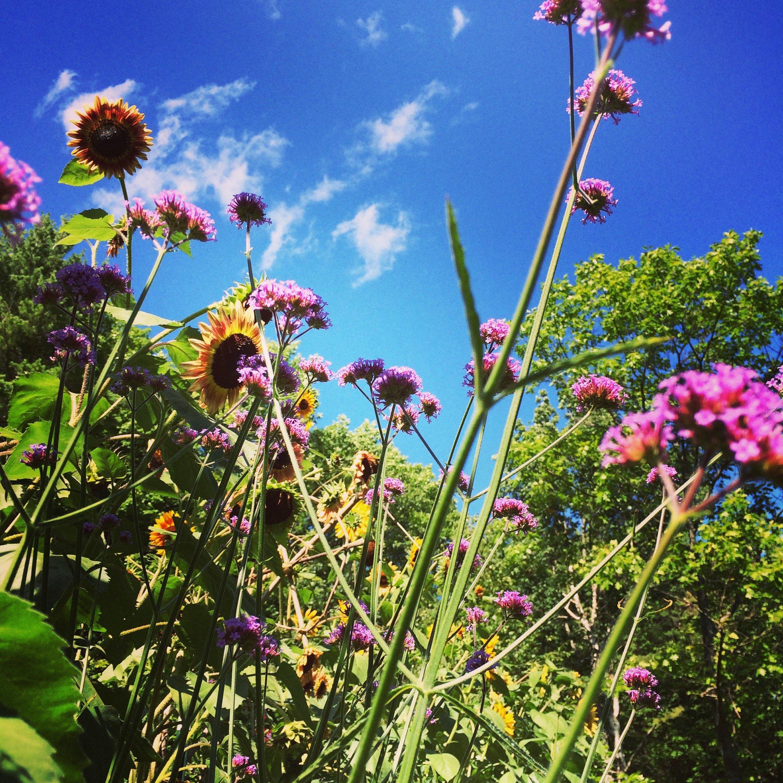Raven_Crest_Retreats_garden.jpg