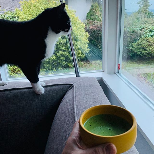 Before the snow in Seattle this week, Luna and I shared a morning meditation and matcha moment looking out the window, enjoying all the dynamic movement - rain sprinkling the grass, birds taking off and landing on the bird feeder, squirrels leaping on and off trees. Who needs television, computers or cellphones. Luna shows no interest in those. But a large window - that's entertainment.