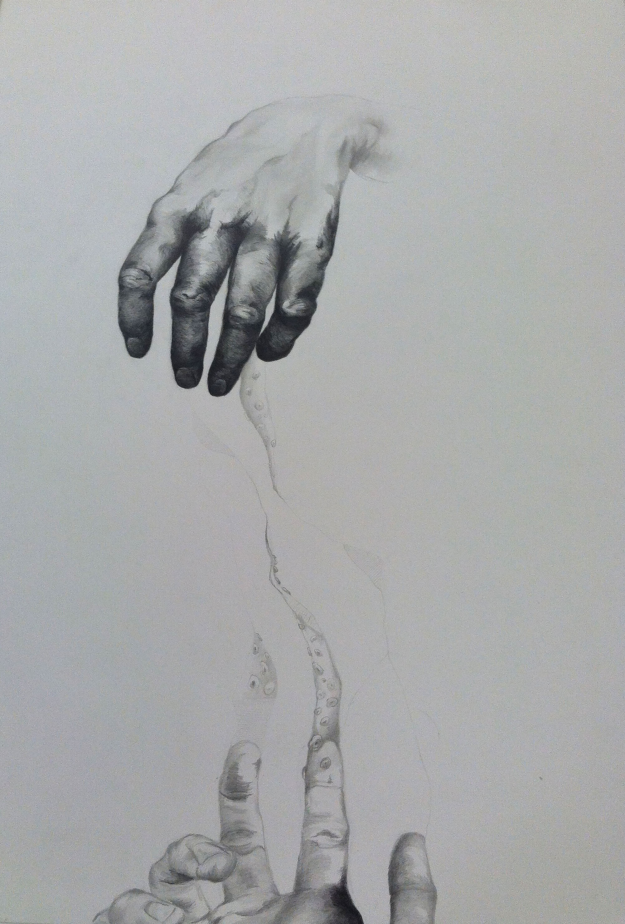 "Tether   29"" x 23"". charcoal + graphite on paper. 2014"