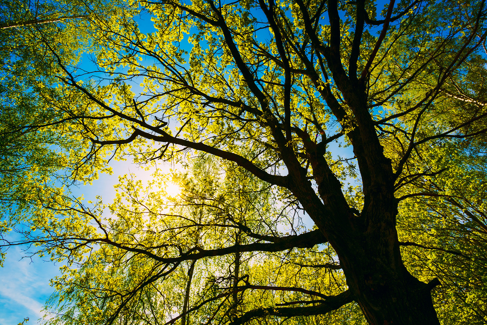 bigstock-Spring-Sun-Shining-Through-Can-86453774.jpg