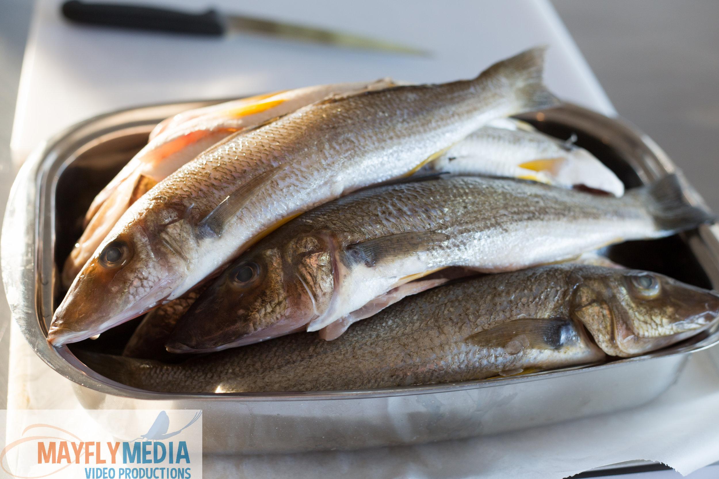 Fish-Food-i-am_.jpg