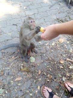 monkeyandbanana.jpg