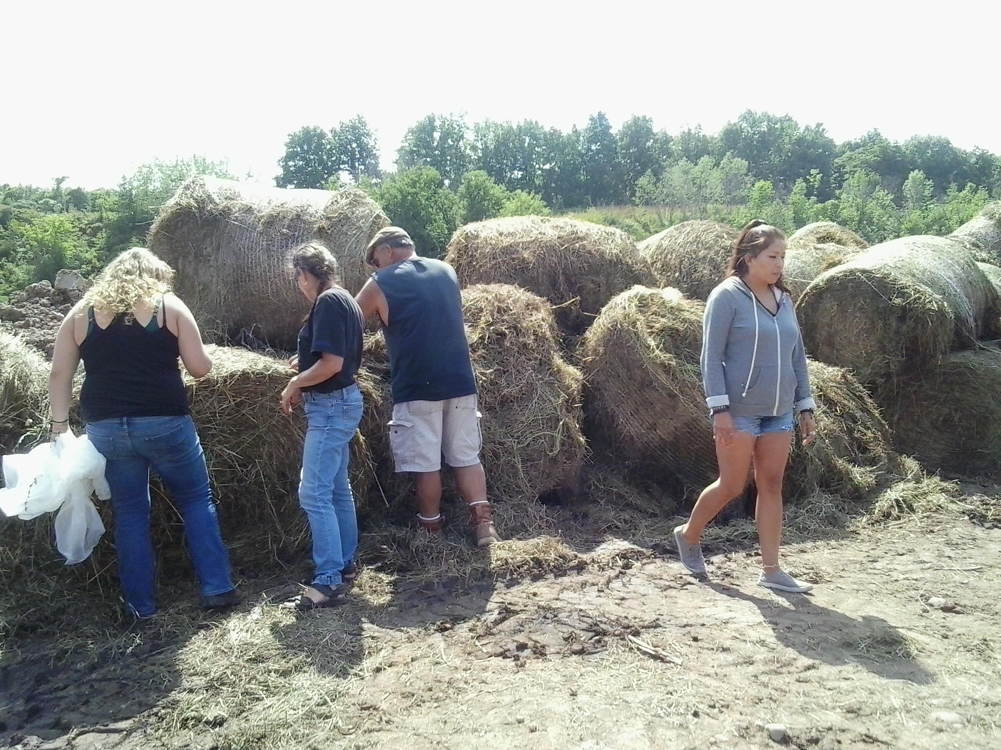 POME hay for compost.jpg