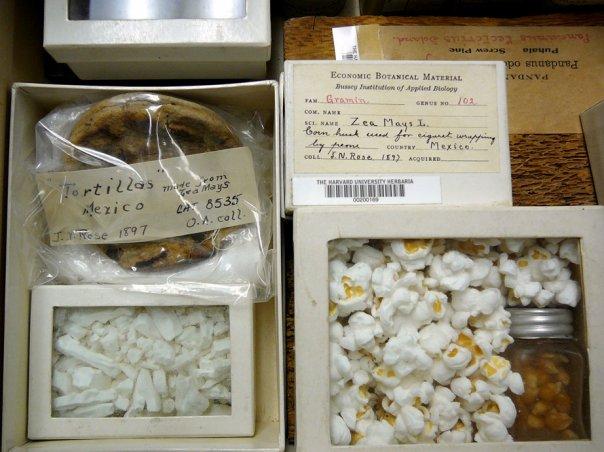 Museum herbaria research 04.jpg
