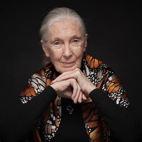 Jane_Goodall_Portrait_500.jpg
