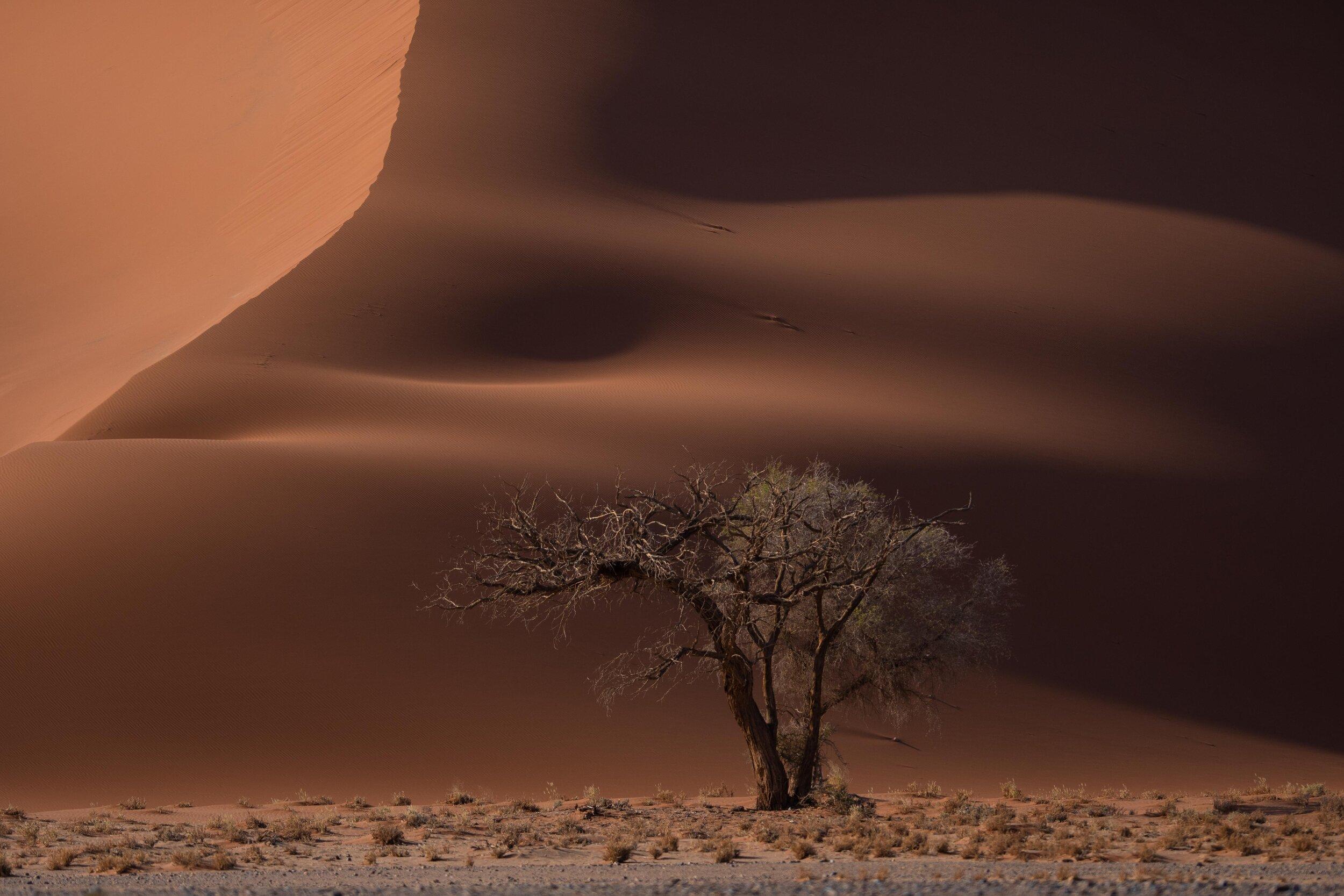 Martin-Krolop-Namibia-digitalEVENT_4.jpg