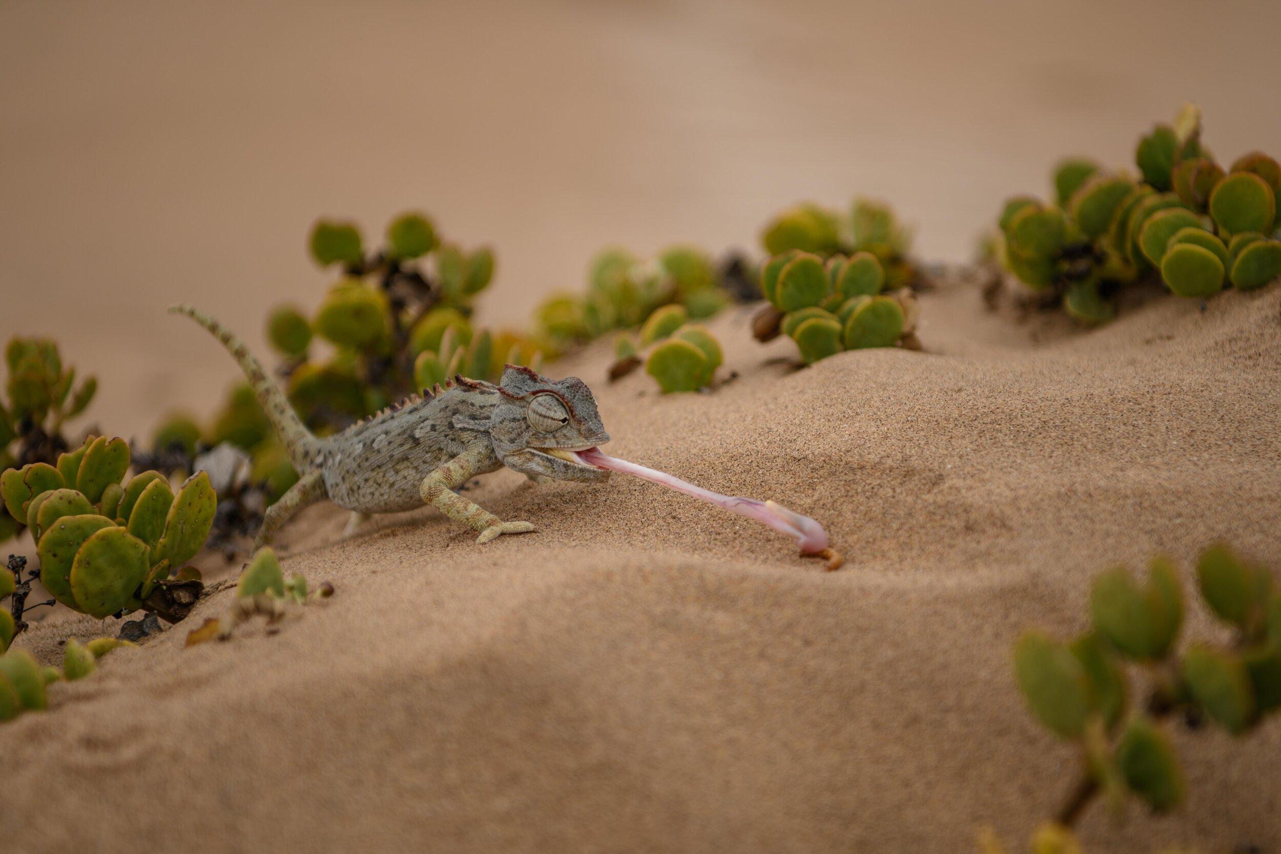 Martin-Krolop-Namibia-digitalEVENT_5.jpg