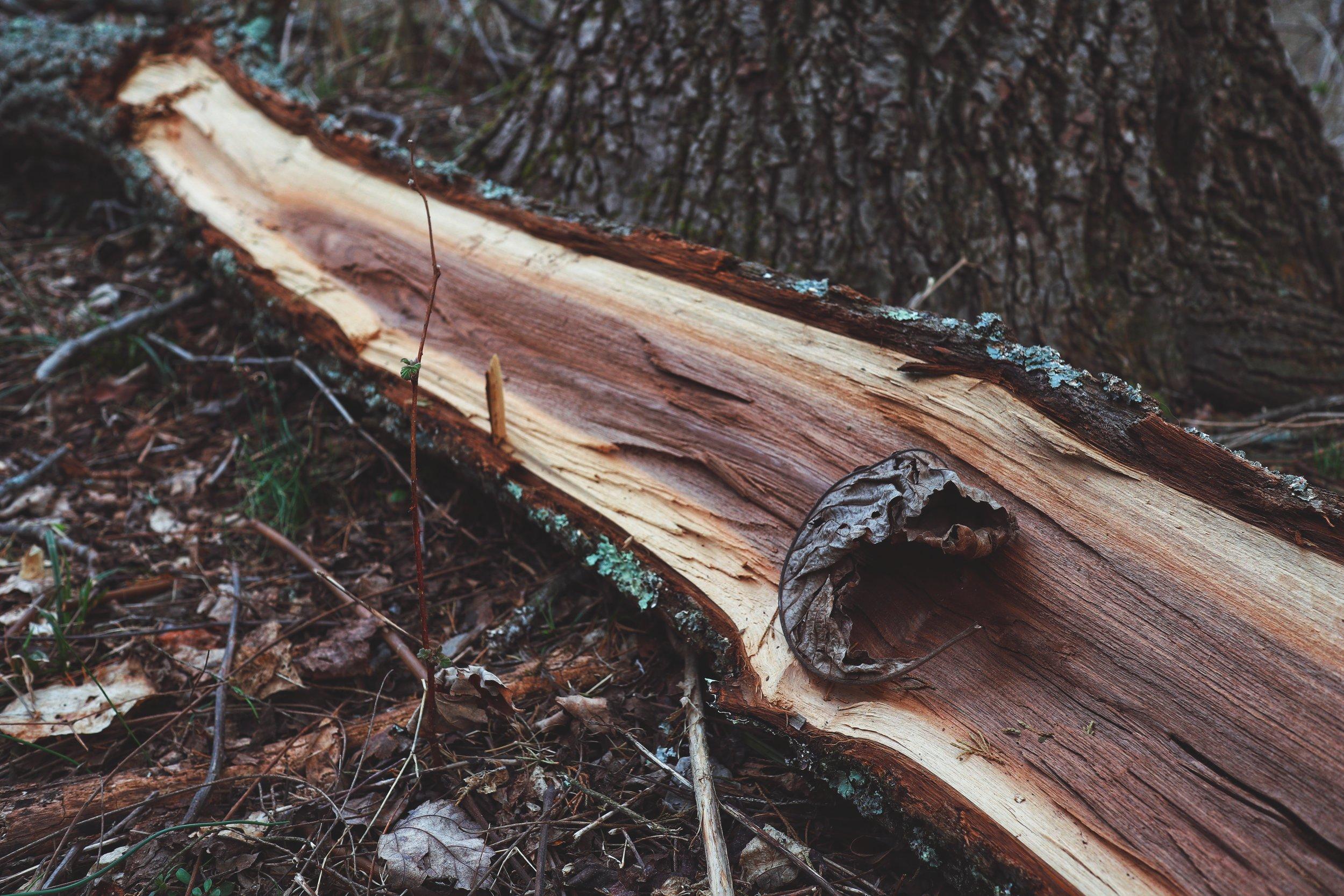 watchumg log leaf.jpg