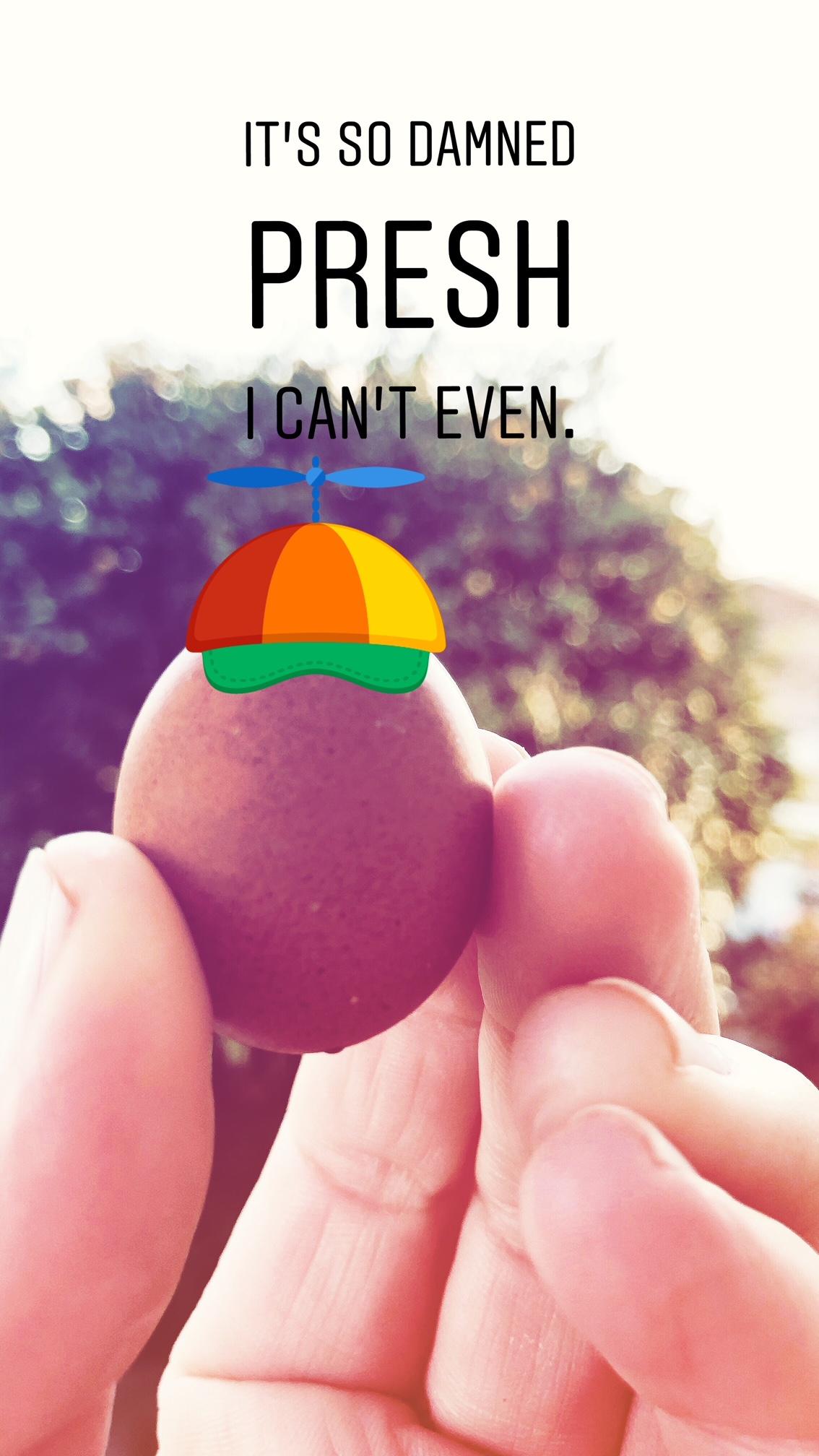 Fart Egg preciousness at drinkingwithchickens.com
