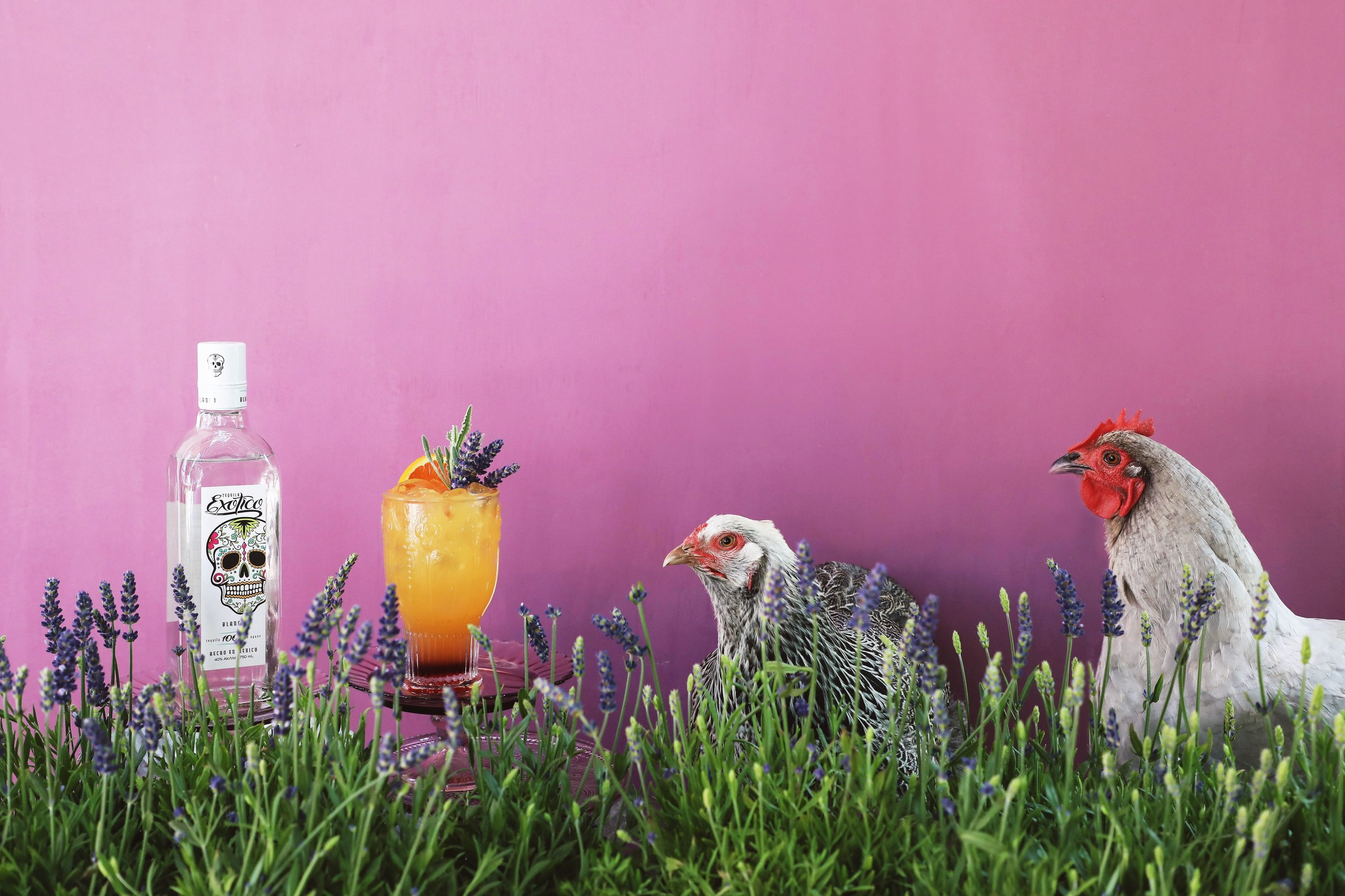 Lavender Tequila Sunrise made with Exotico Tequila Blanco, fresh orange juice, and a lavender-infused grenadine | drinkingwithchickens.com