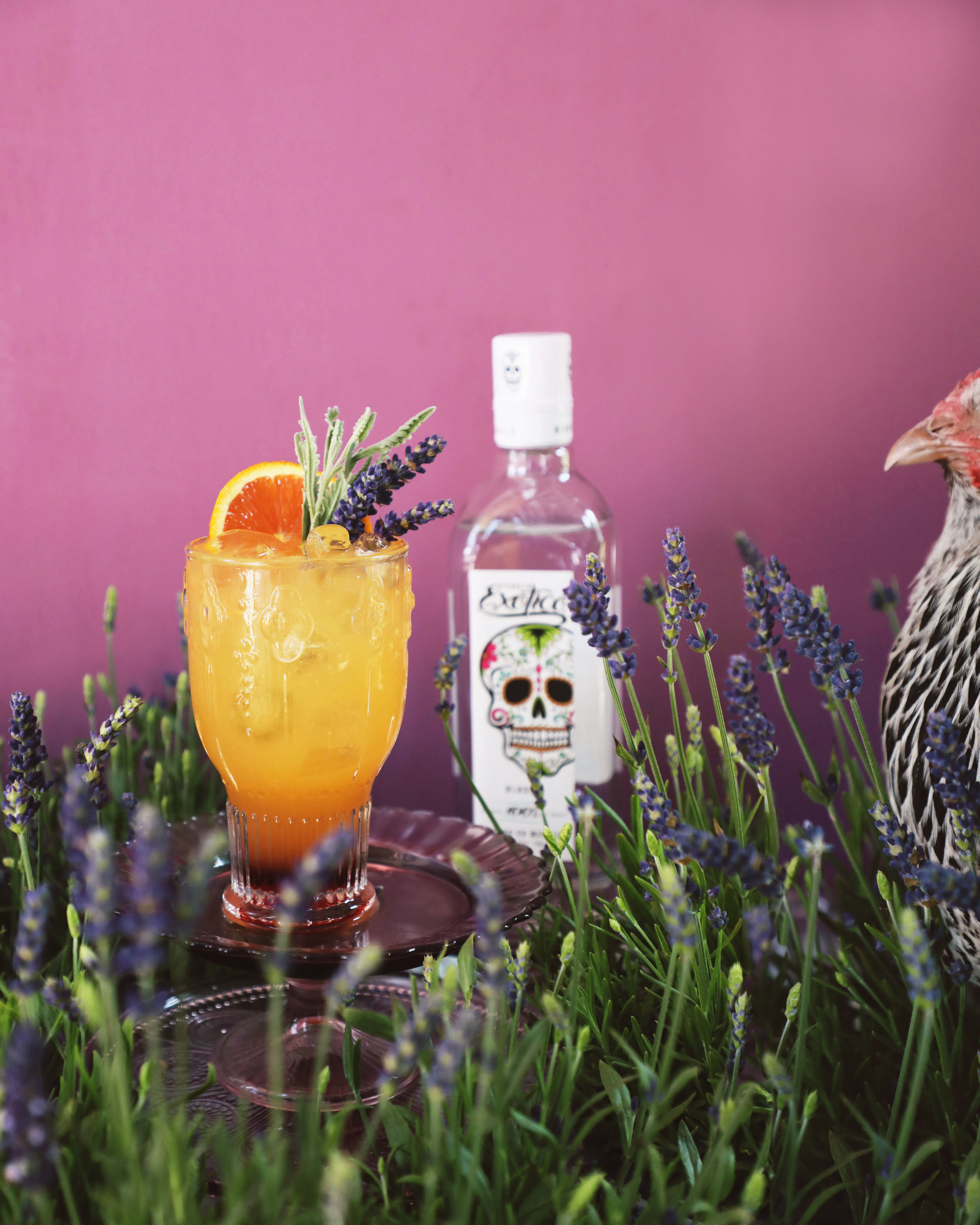 Lavender Tequila Sunrise made with Exotico Tequila Blanco, fresh orange juice, and lavender-infused grenadine | drinkingwithchickens.com