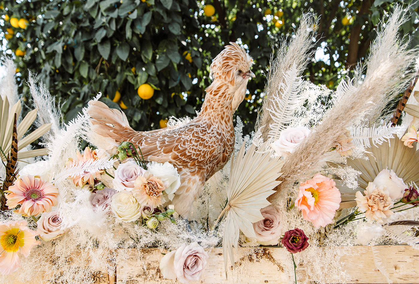 A chicken frolicking in the floral centerpiece | drinkingwithchickens.com