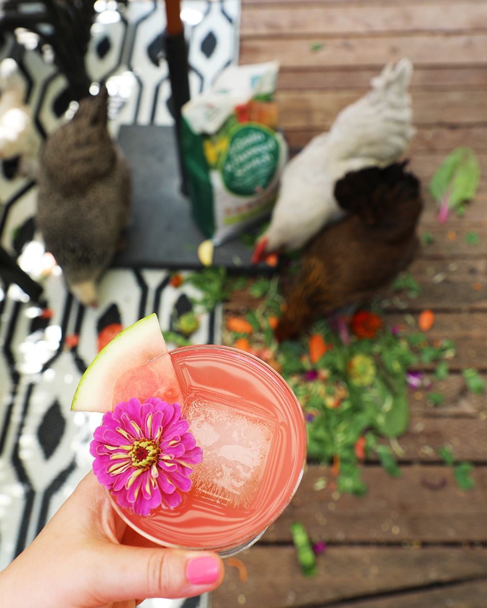 Happy hour in the Chicken Bar with Manna Pro Poultry treats | drinkingwithchickens.com
