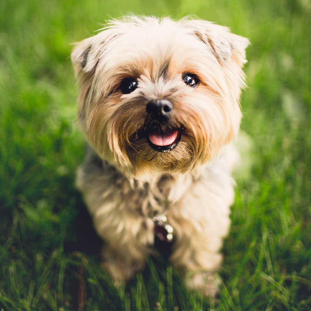 The-Dog-Nest-Brookfield-Doggy-Daycare-Boarding-Grooming-Training-New-Enroll-Sign-Up-New-Clients