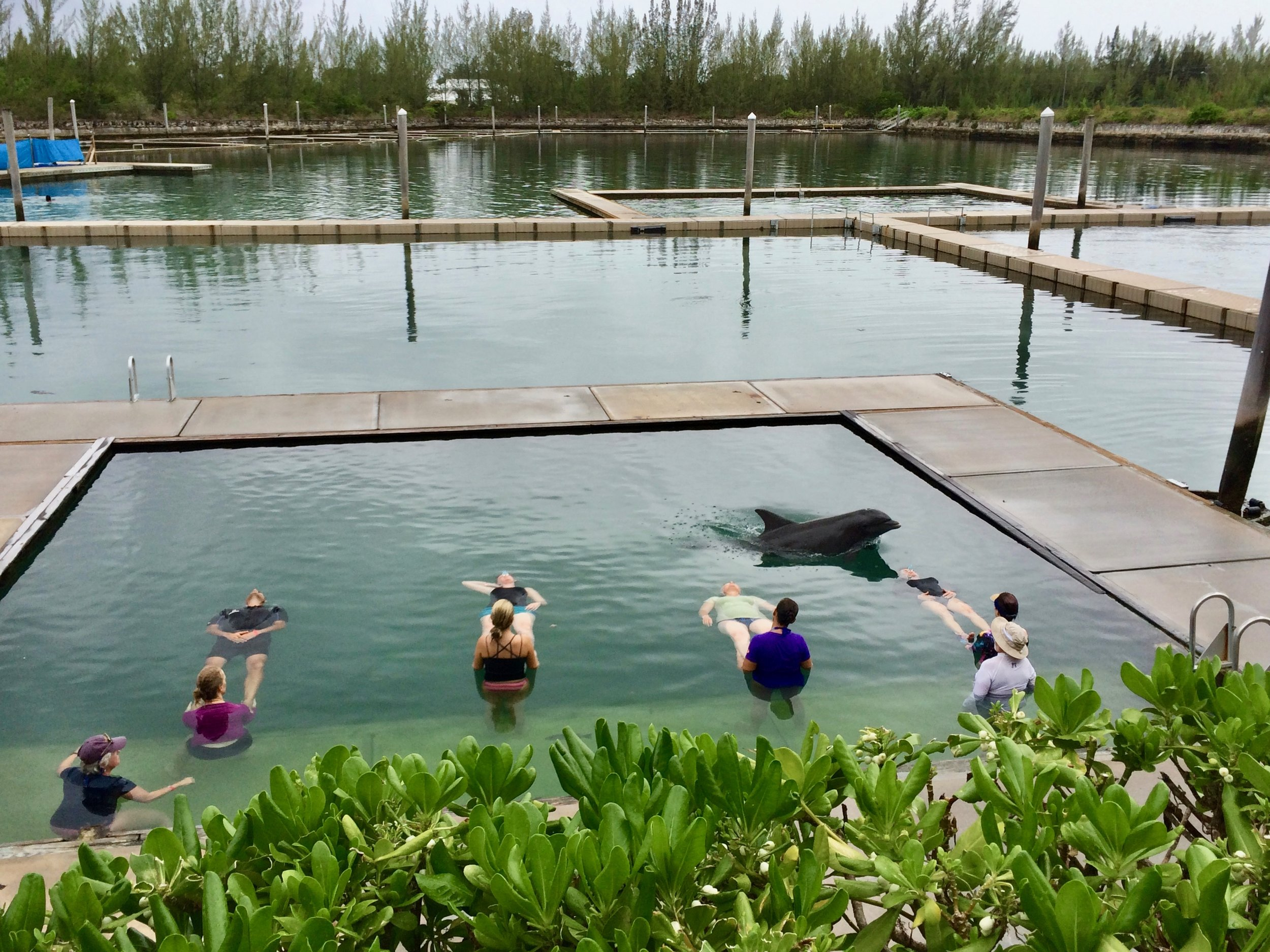 Dolphin Assisted Therapy Fund
