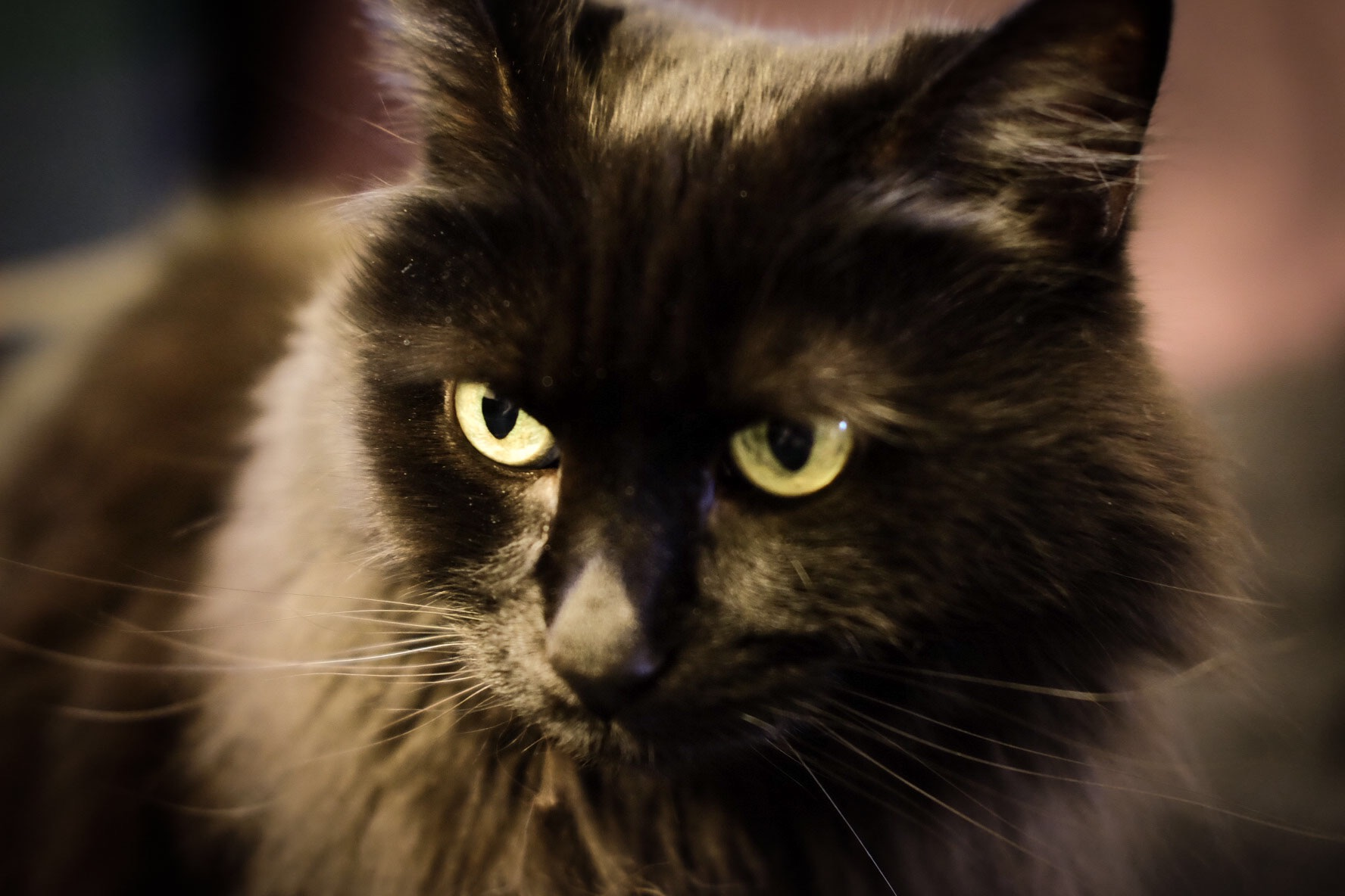 Hallie, our 11 year old black cat