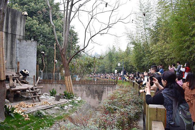 Cameras watching people watching pandas 🐼