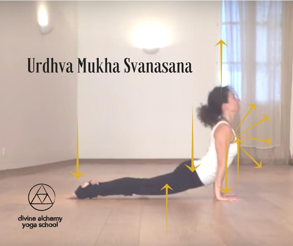 Urdhva Mukha Svanasana Mira Jamadi