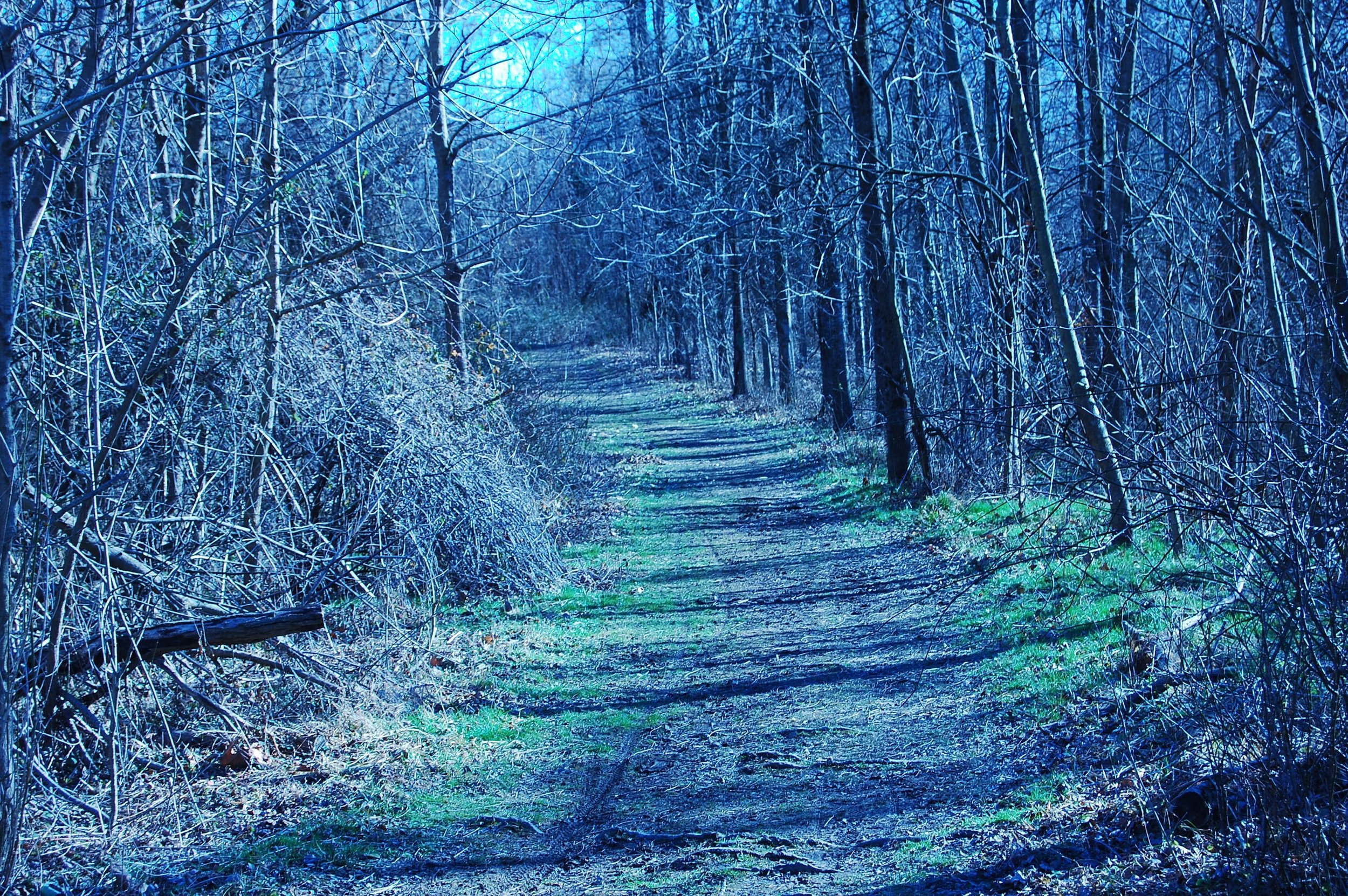 path-in-the-woods.jpg