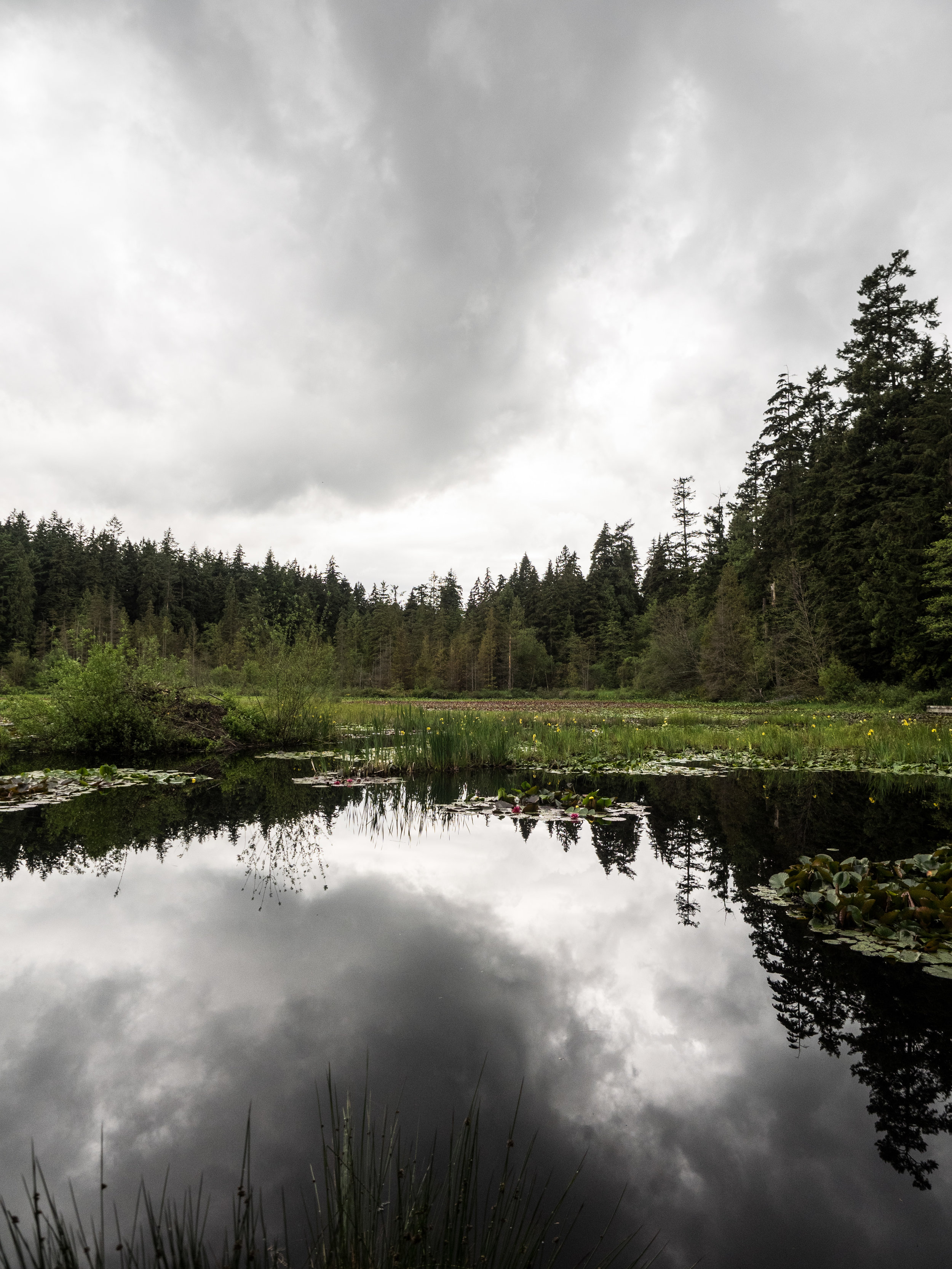 Nearly the entire Beaver Lake is covered in Water lilies.