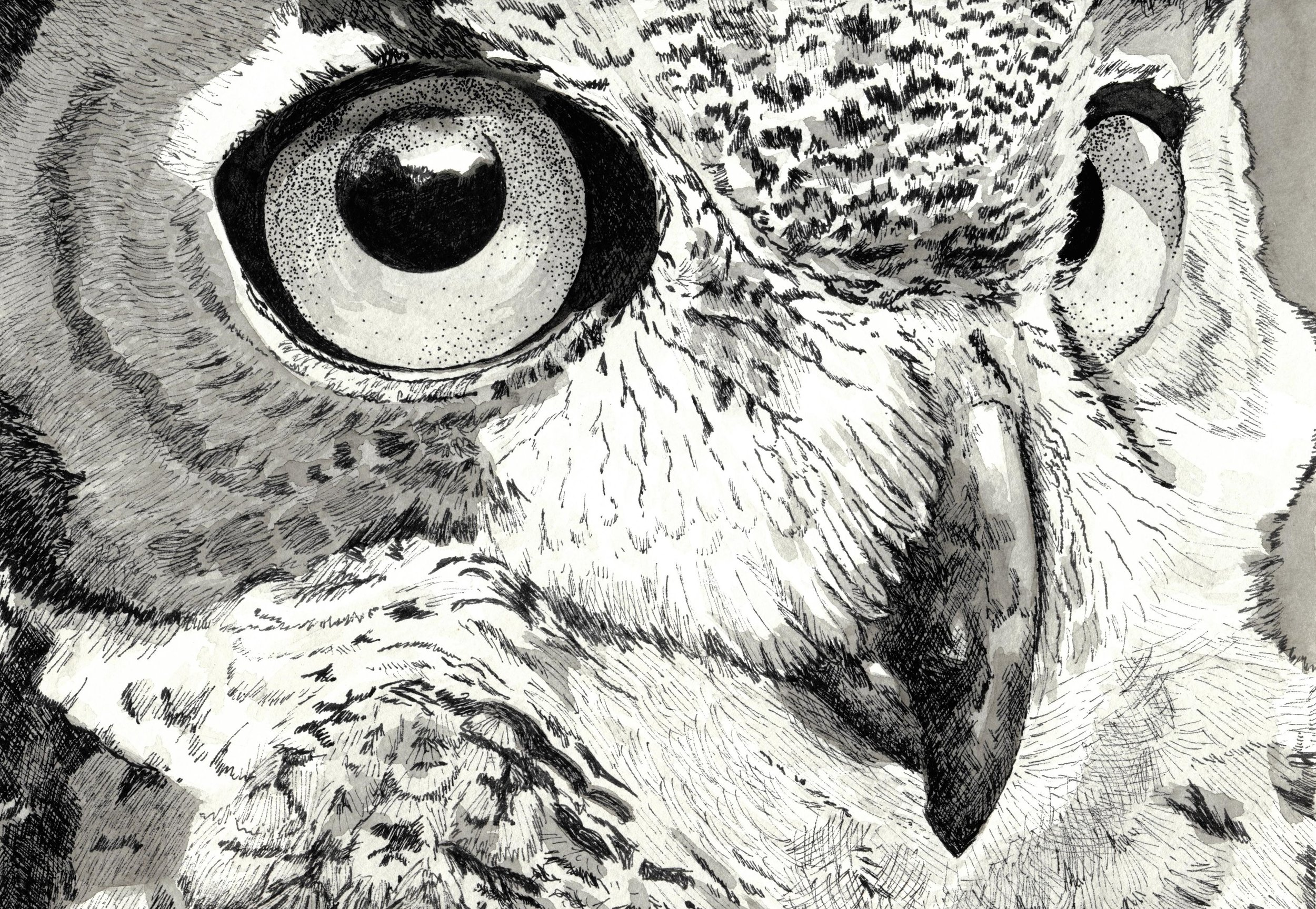 Carolyn_Byers_DO_NOT_USE_WITHOUT_PERMISSION_greathornedowl_ink.jpg