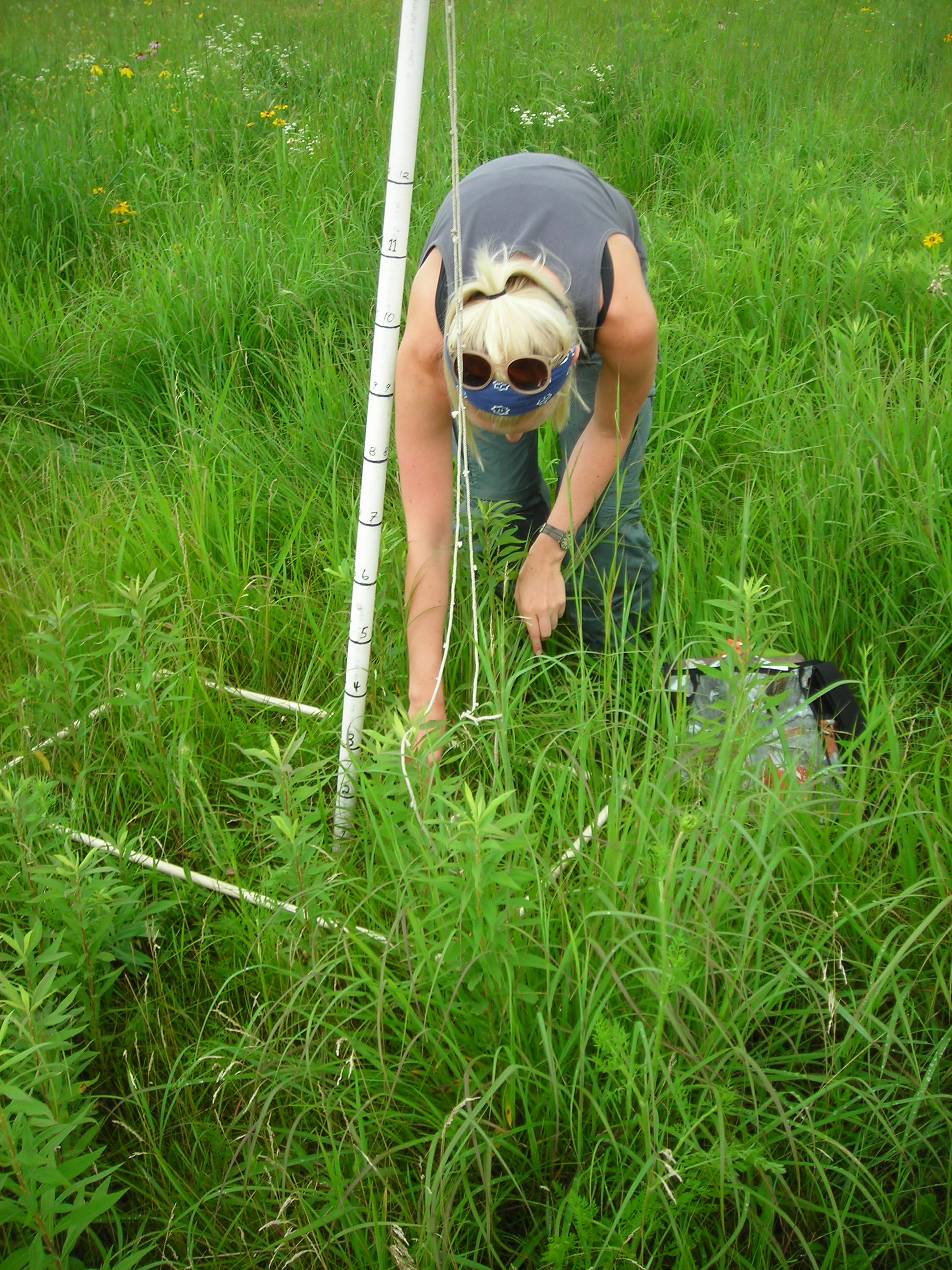 Measuring litter depth. The Robel pole (vertical) and quadrat frame (laying on the ground) are also pictured.