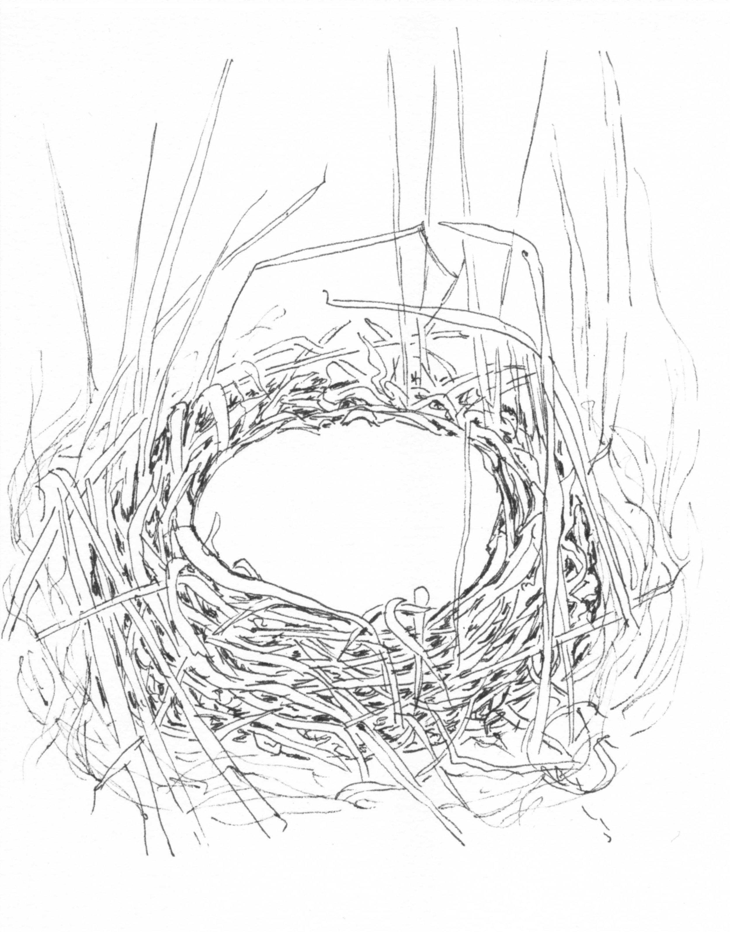 Henslow's Sparrow Nest.jpg