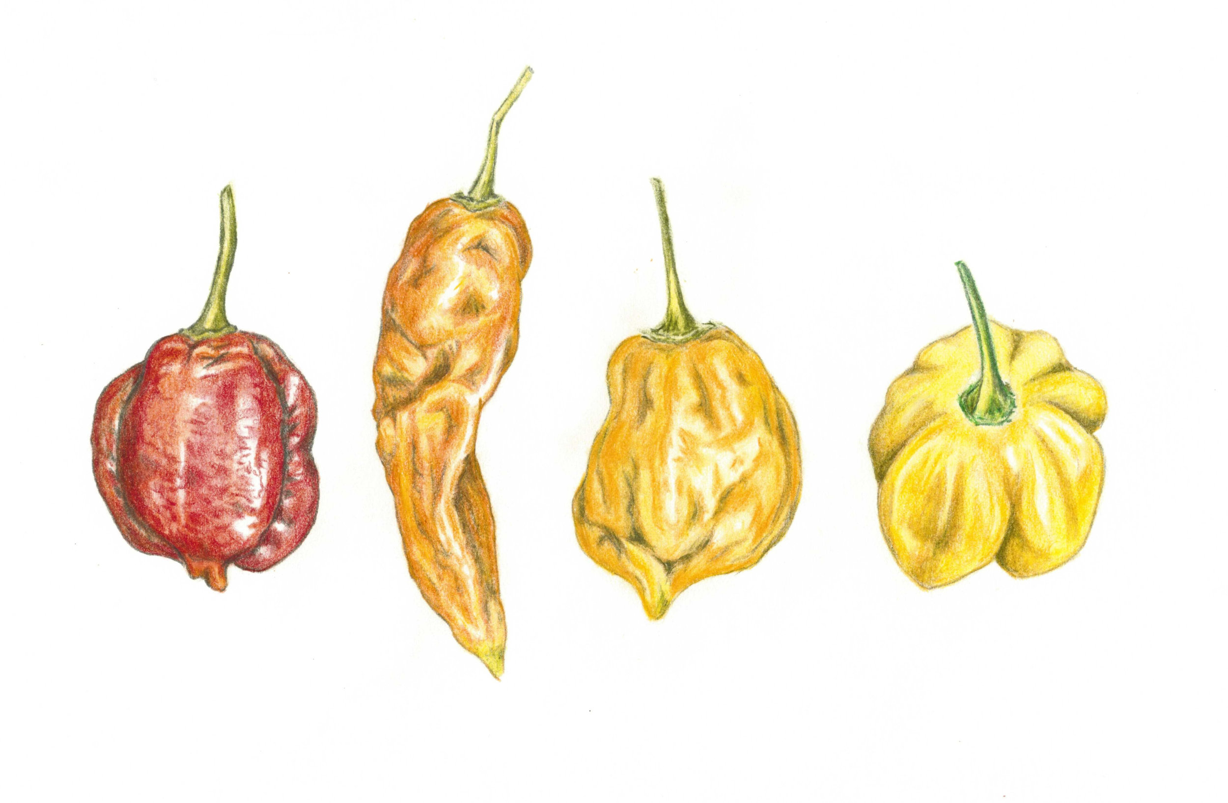 peppers_cropped.jpg