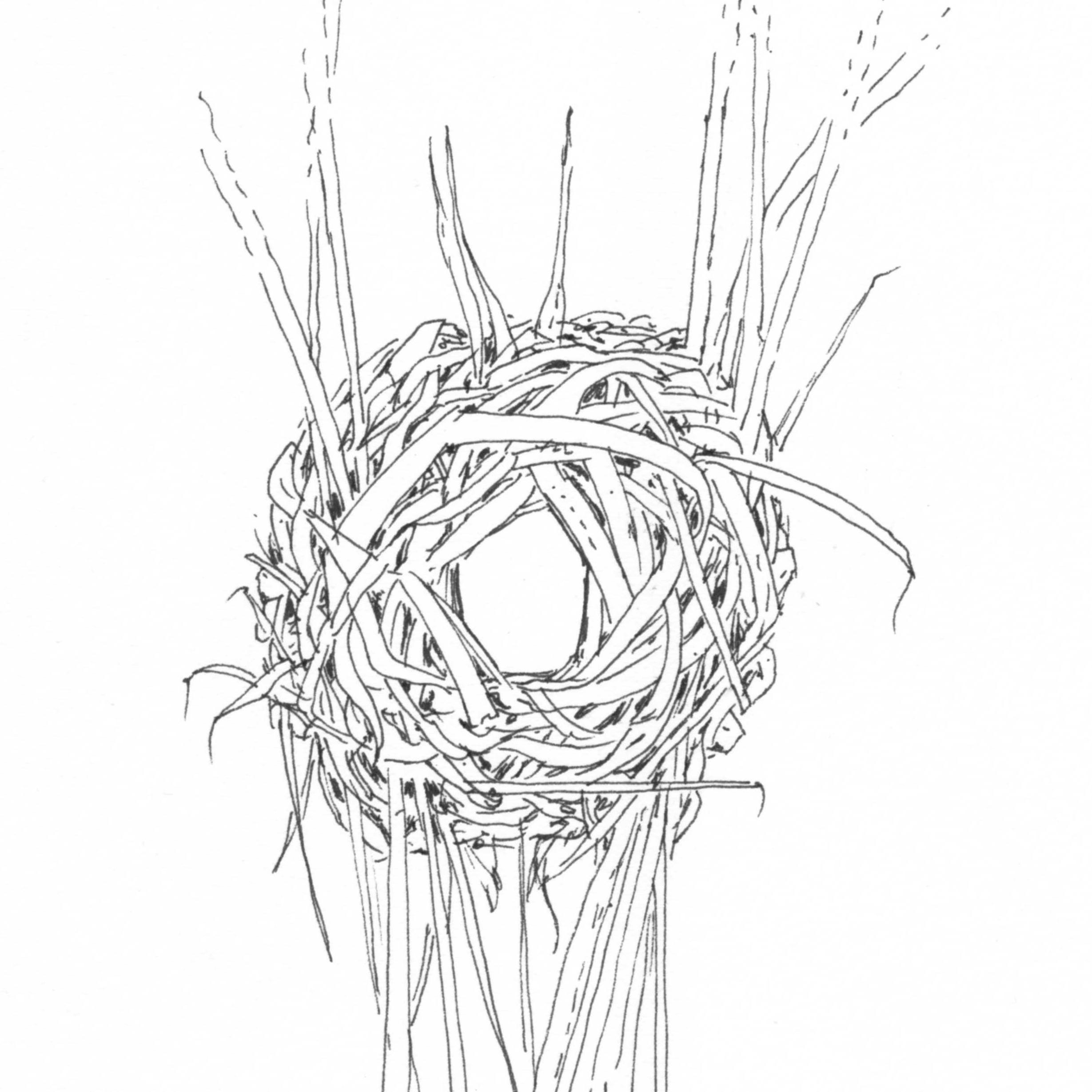 Sedge wren nest black&white.jpg