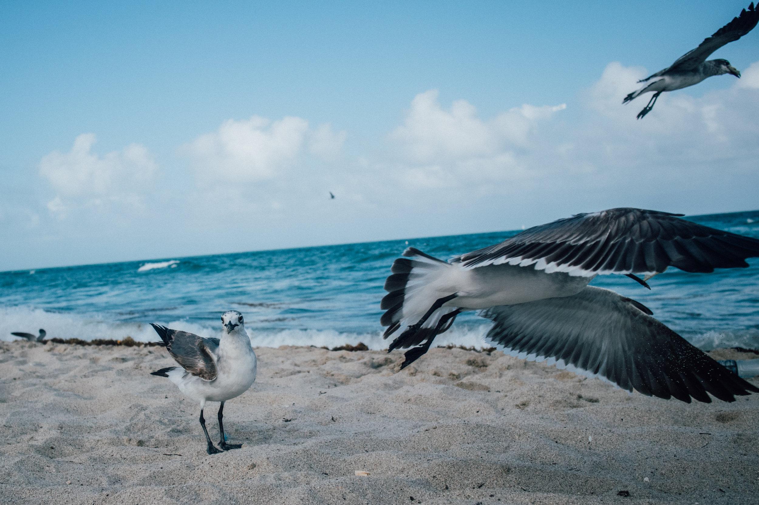 Miami by Jorge Guiro 35.jpg