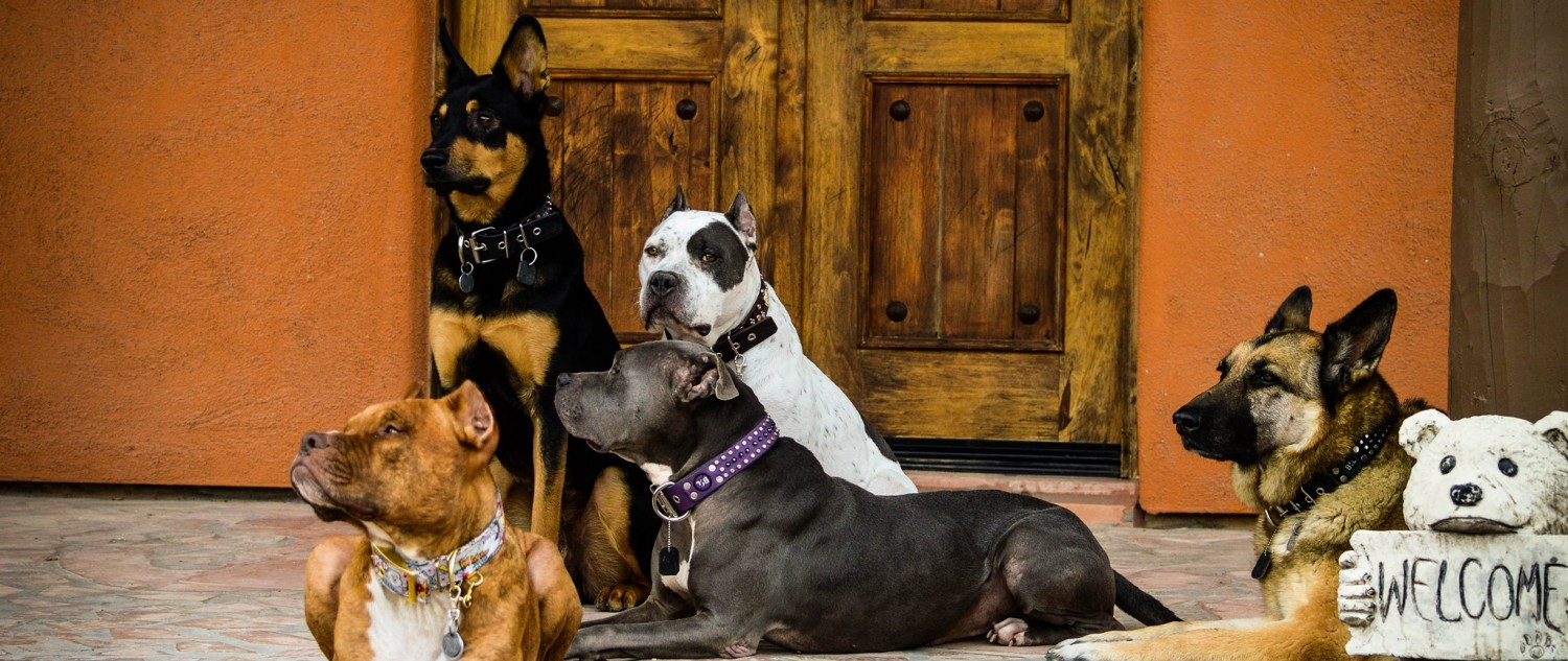 """- Dogs Behavin""""We are a dog training and grooming business that treats your dogs as if they were part of our family. We focus on the good that the dogs give us and make that better both in training and grooming. If your dog comes for boarding , complimentary grooming is included.https://dogsbehavintucson.com/520-260-6936Dogsbehavin@gmail.com"""