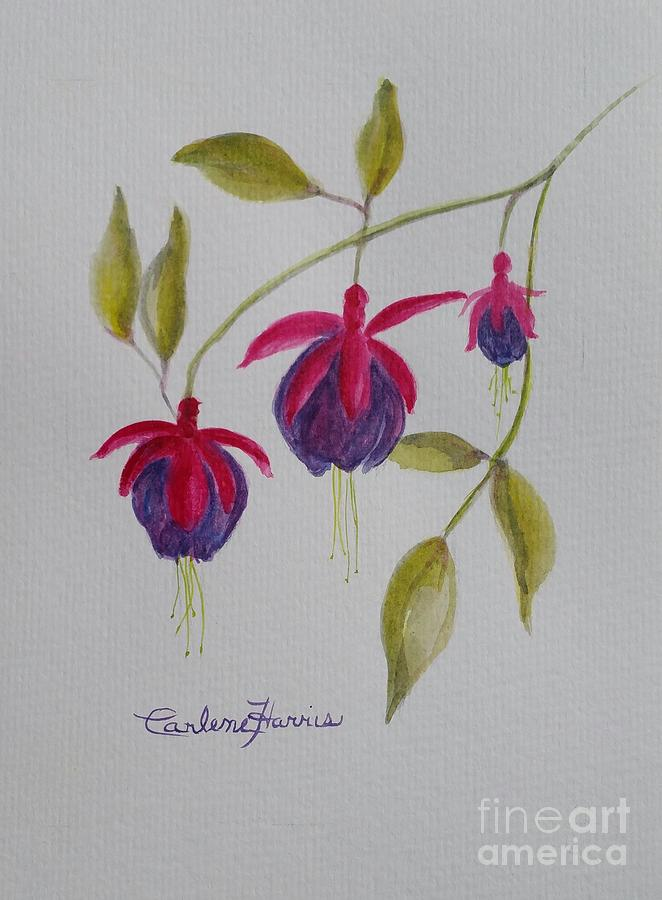 "Original watercolor part of Carlene's new series ""In Bloom."" Source: https://carlene-harris.pixels.com/art"