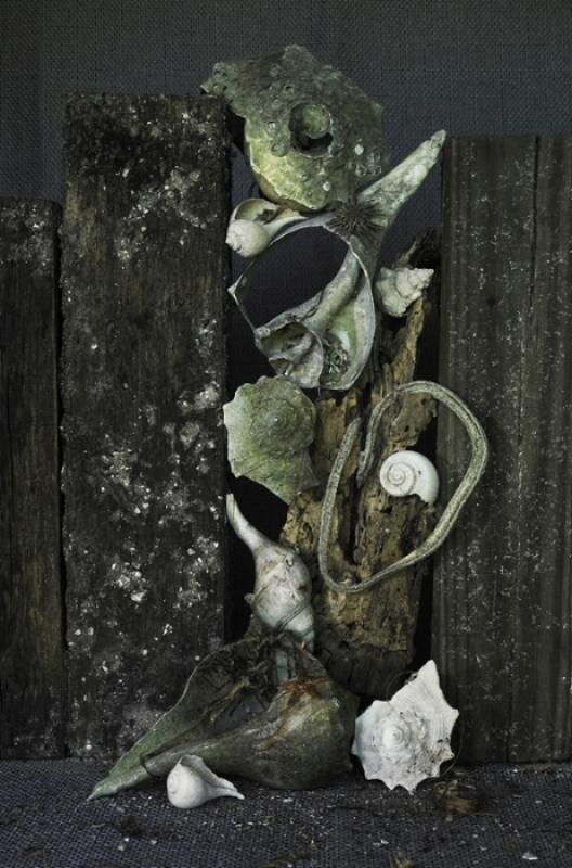 "Whelk, Banded Tulip, Paper Fig, Sea Urchin, Dried Eel ,  sold,  photograph, 40"" x 30"""