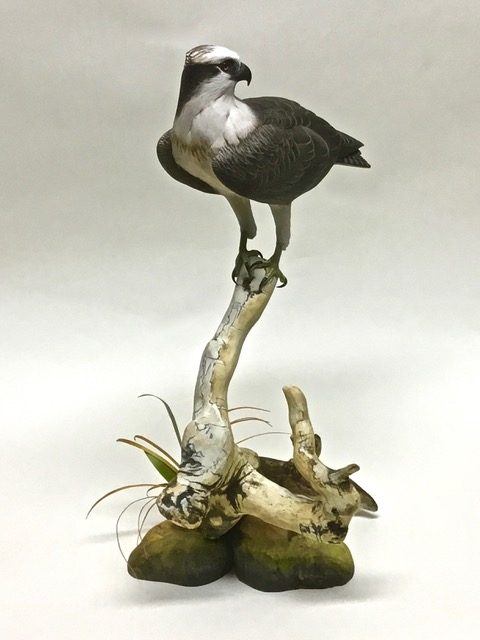 SOLD  Osprey, 1/3 size Carved from solid piece of basswood, hand painted, vegetation brass