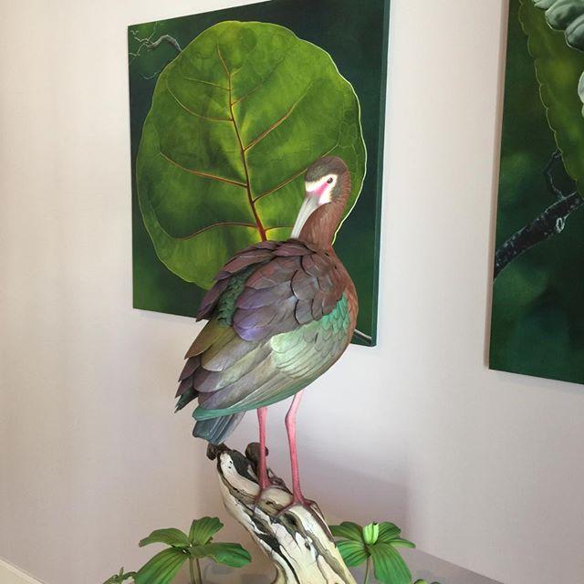 #birdcarved from 1 piece of #wood !!! 5 time #Worldmasteraward winner #garyeigenberger. #whitefacedibis @watsonmacraegallery. #giantseagrape leaf by #carinwagner #environmentalist painter