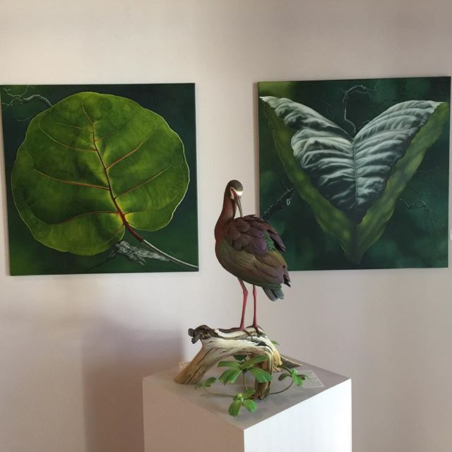 #beautyheals new exhibit #watmac gallery #lusciousleaves #painting by @carinwagner make #woodsculpture of #whitefacedibis by #GaryeigenBerger feel right at home #waterfowl #woodcarving #beauty #realismmagic