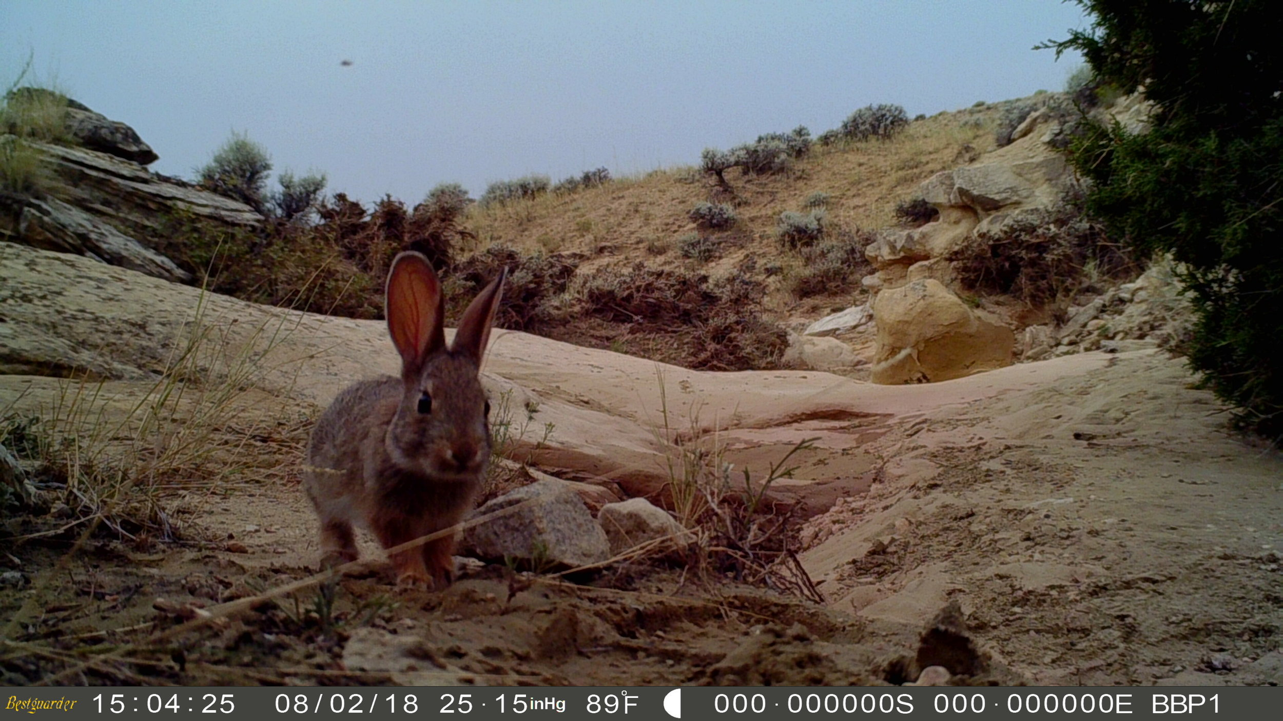 Image by BBPI Trail Cam