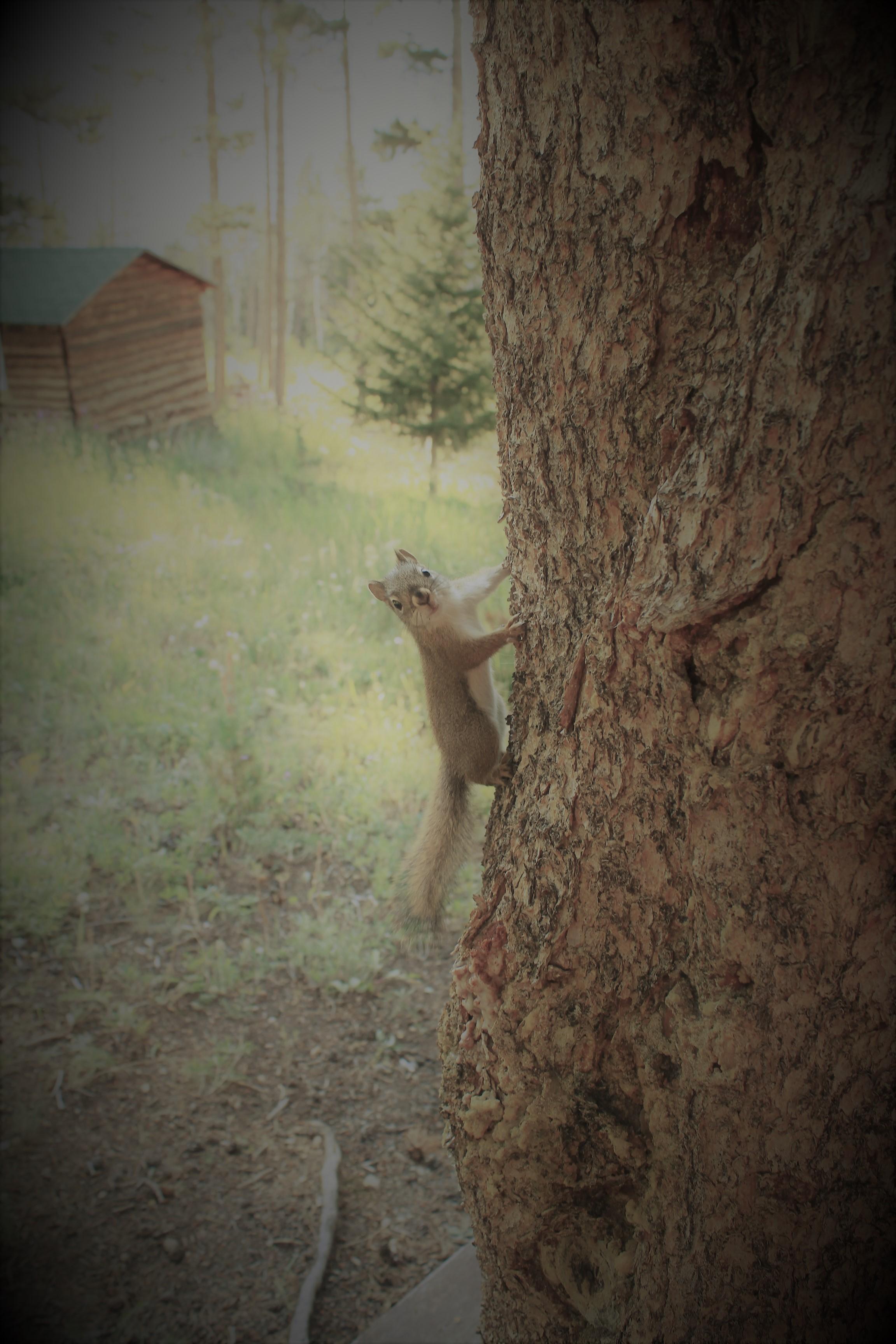 squirrel on tree.JPG
