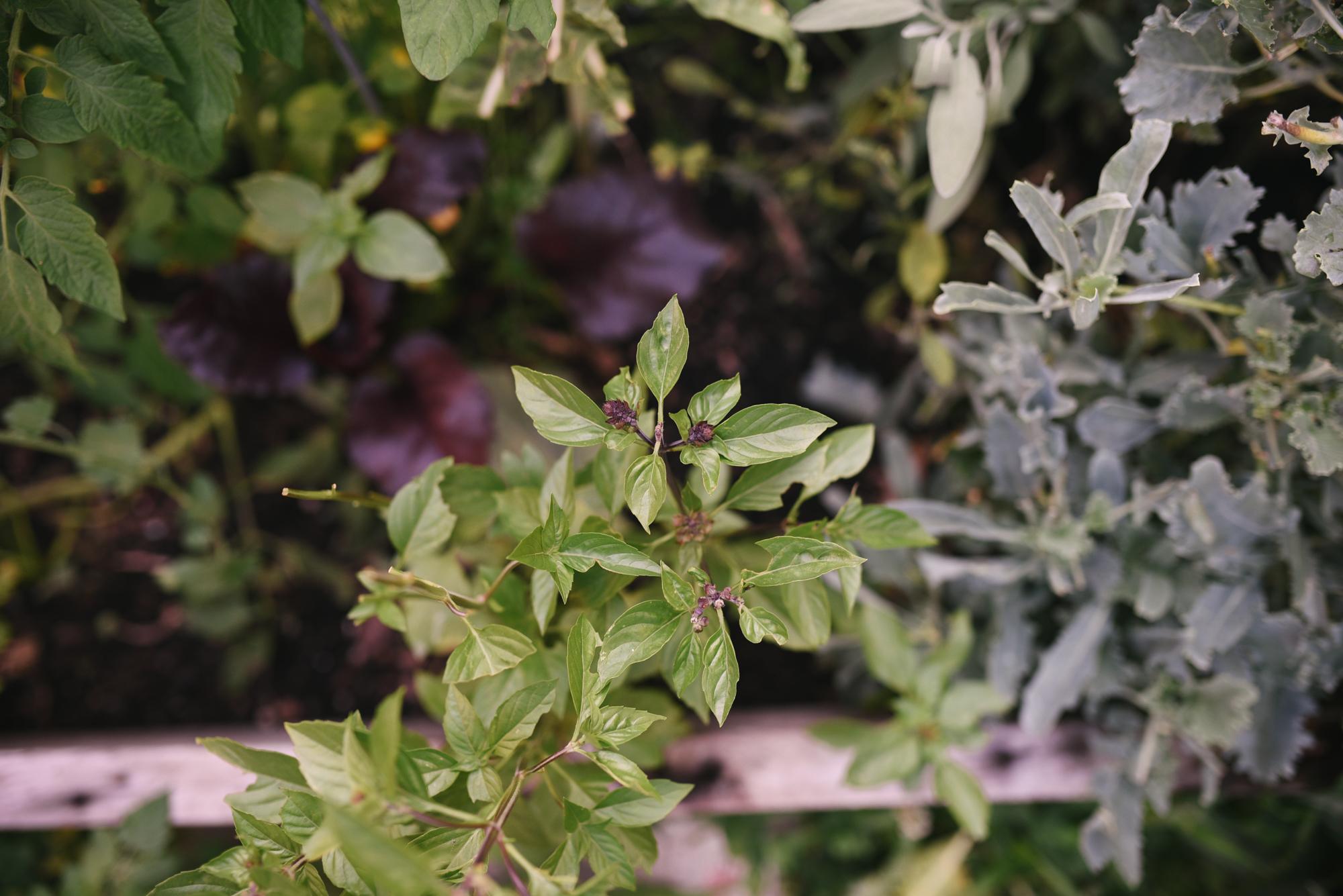 Ann & Brian's Garden Web (13 of 27).jpg