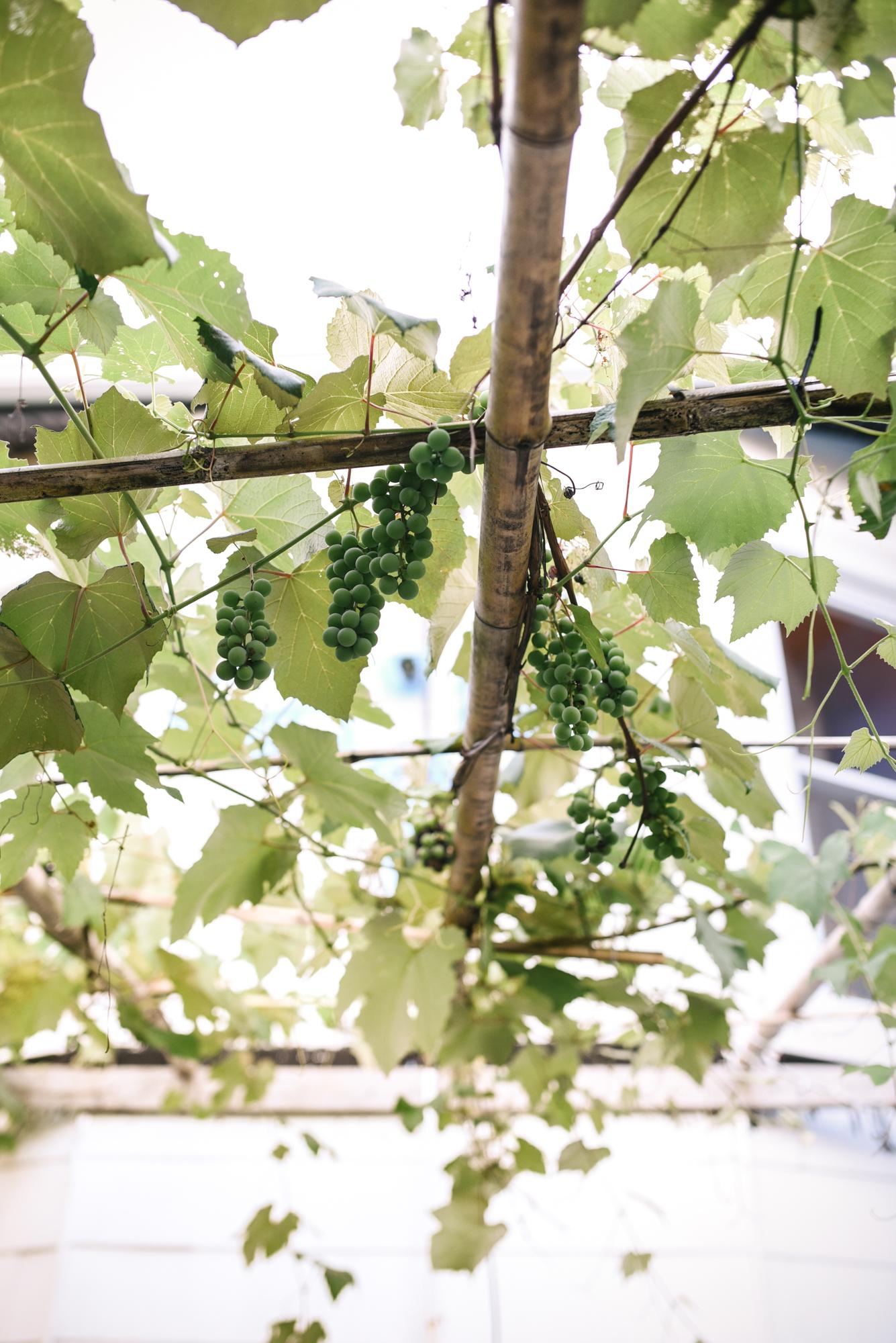 Ann & Brian's Garden Web (15 of 27).jpg