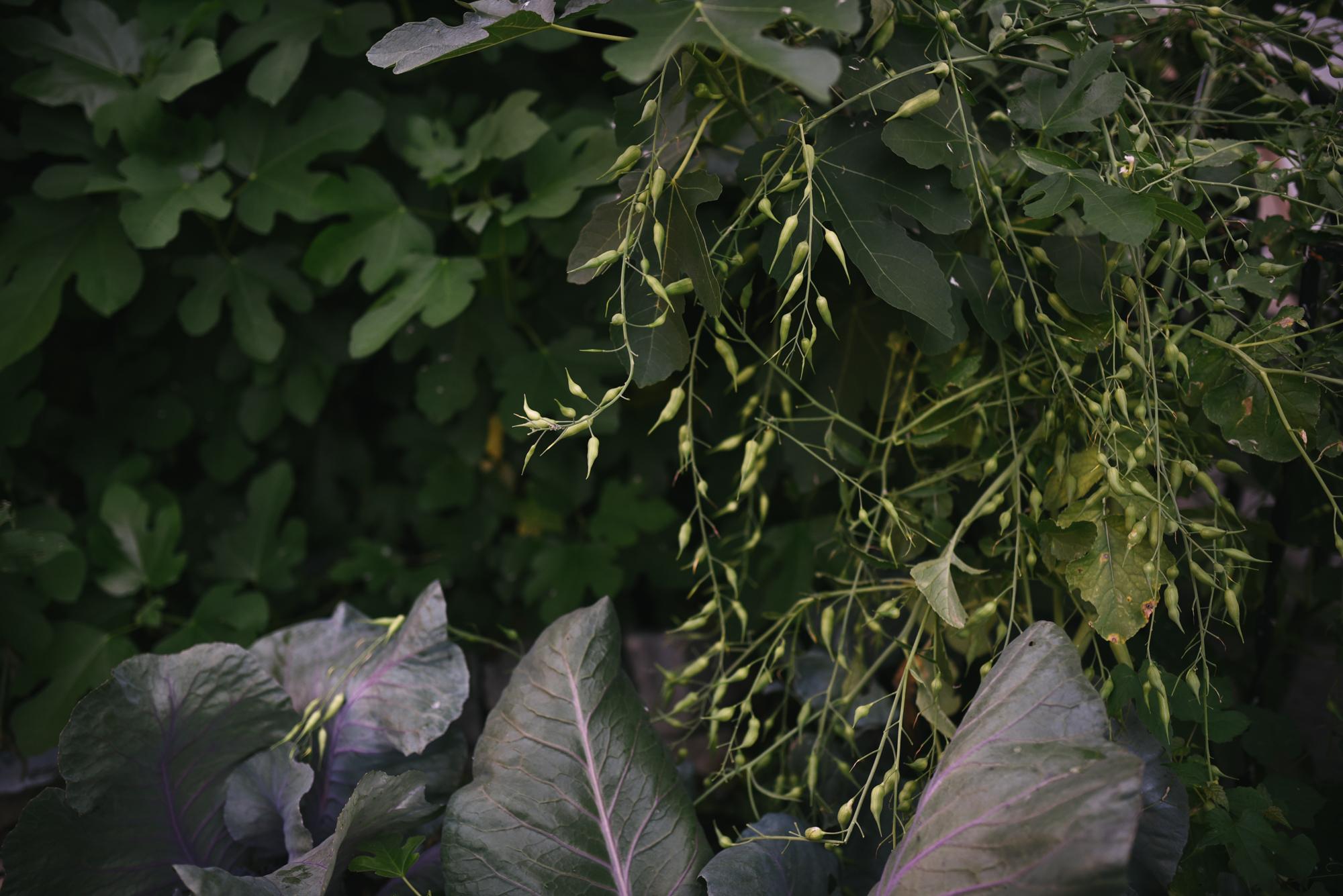 Ann & Brian's Garden Web (26 of 27).jpg
