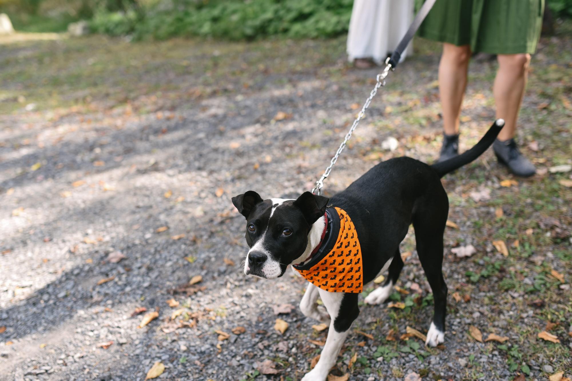 Mountain Wedding, Outdoors, Rustic, West Virginia, Maryland Wedding Photographer, DIY, Casual, Cute dog at wedding, Wedding Guests Pets