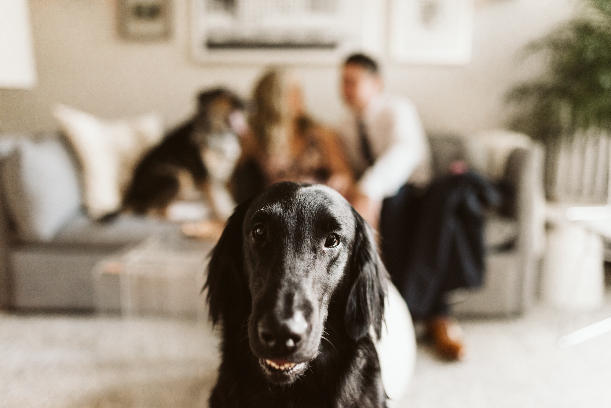Pop-up Ceremony, Outdoor Wedding, Casual, Simple, Lake Roland, Baltimore, Maryland Wedding Photographer, Laid Back, Bride and Groom at Home with Dogs, Dog Portrait