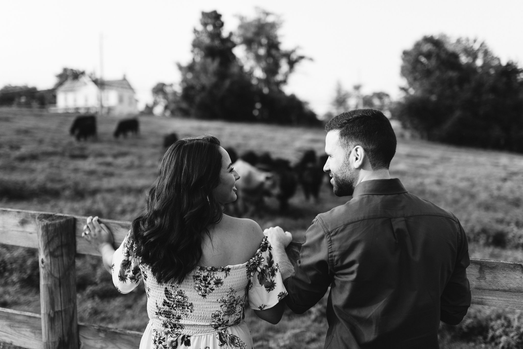Frederick Maryland, Baltimore Wedding Photographer, Engagement, Bend in the River Farm, Outdoor, Rustic, Nature, Bride and Groom Looking Over Field of Cows, Animals, Black and White Photo