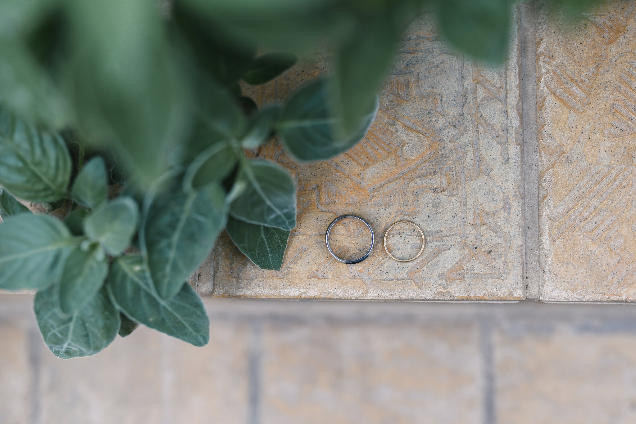 Rawlings Conservatory, Druid Hill Park, Intimate Wedding, Nature, Baltimore Wedding Photographer, Romantic, Classic, Closeup Photo of Wedding Rings