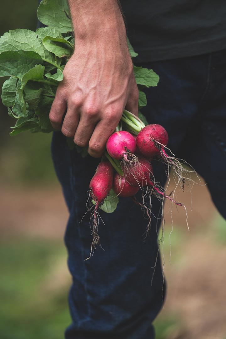 pick-beauty-radish.jpg