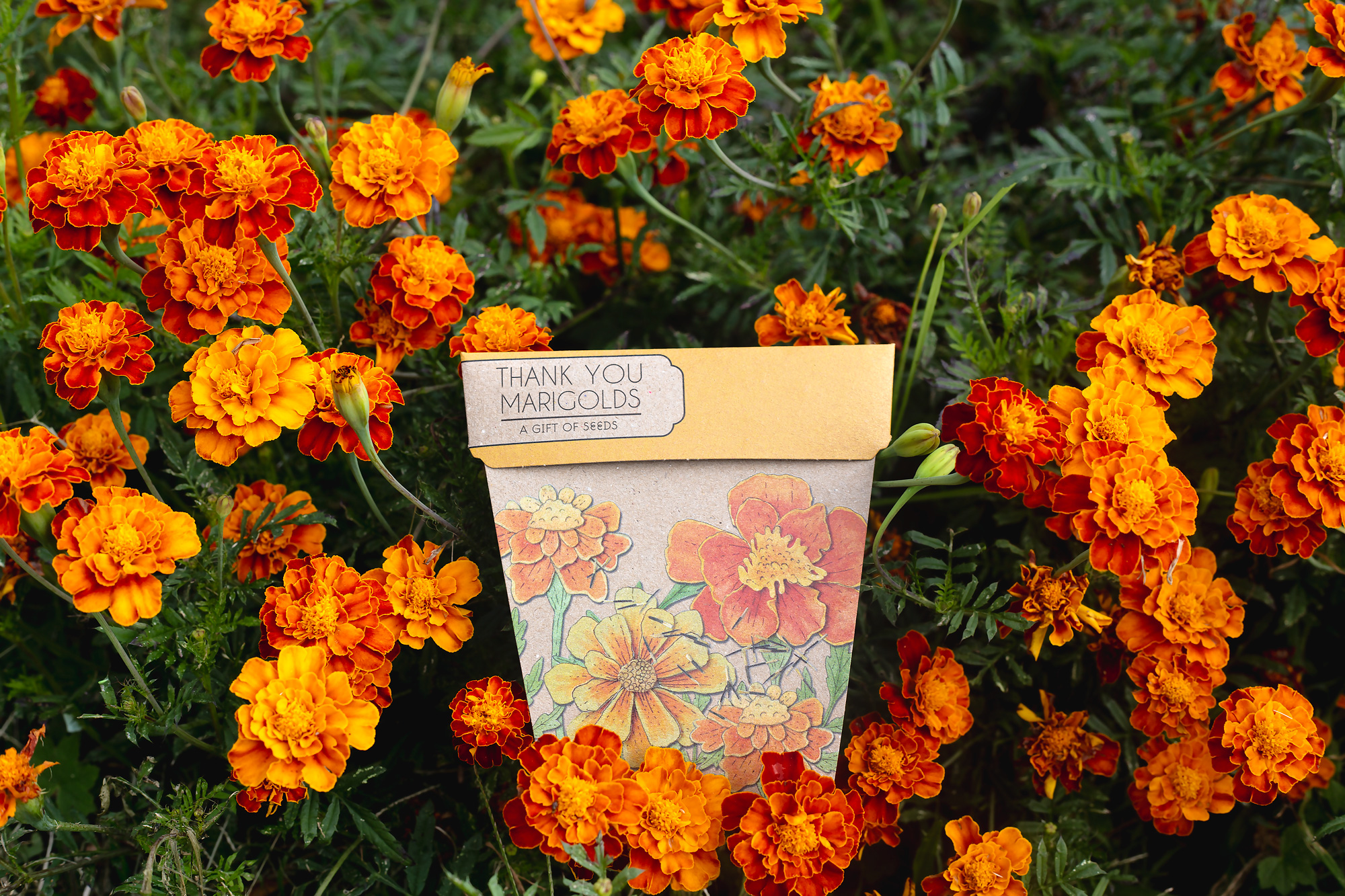 Sow N Sow    Sow 'n Sow was created by Michelle Brady who in seeking a more creative career combined her love for plants and gardens with the dream of running her own business.  Sow 'n Sow's products are made in Australia using environmentally-friendly materials including 100% recycled paper.