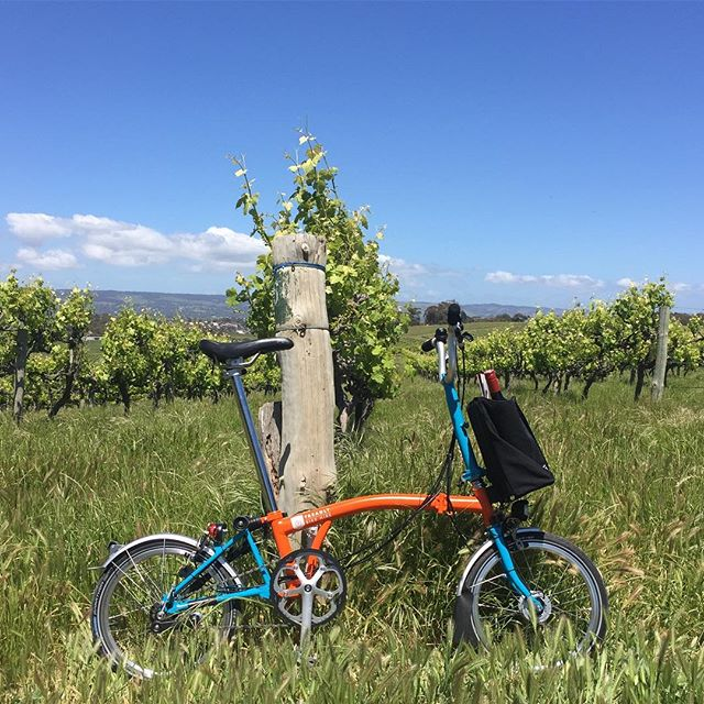 Treadly Bike Hire in its natural habitat on the Fluerieu Peninsula only 40 minutes from Adelaide. Note a bottle of the finest from the region fits snug it the front luggage. #coriolewinery #fluerieupeninsula #southaustralia #seesouthaustralia #hirenow #adelaide #seatovinestrail #bromptonbicycle #treadlybikehire