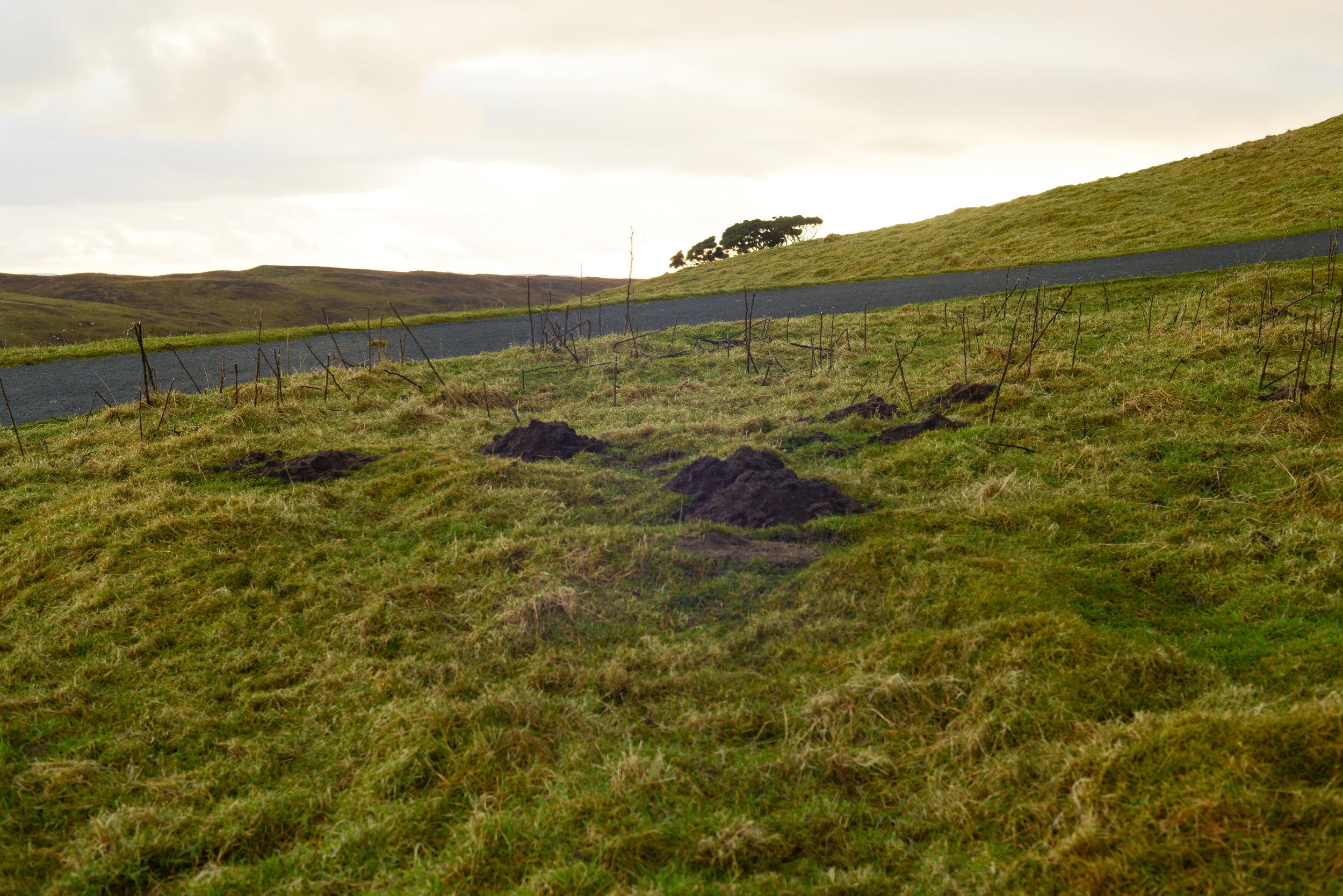 Ayr carrick hills-0240.jpg