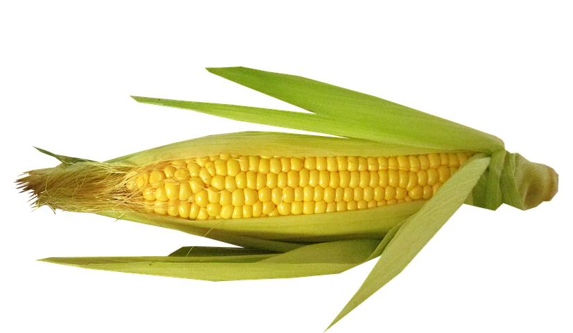 Corn on the cob Branding Boutique